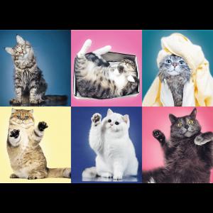 Trefl – Puzzle Kittens 500 Pcs 37377